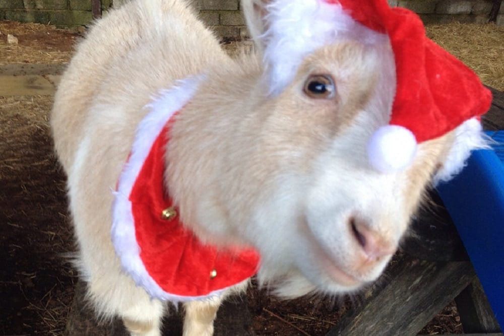 Christmas and New Year breaks at West Woolley Farm