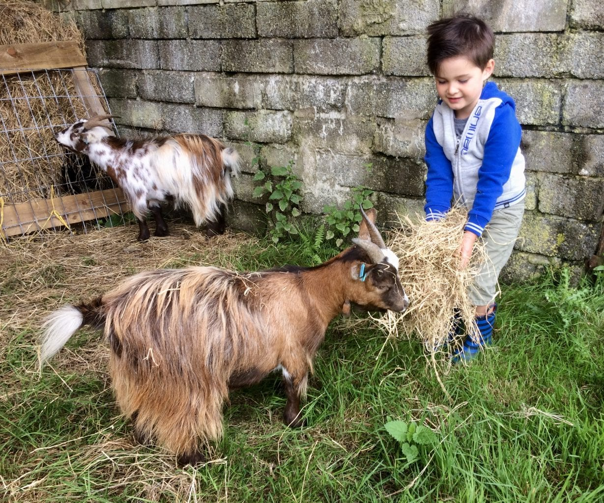 anuimal feeding, child-friendly holids in north Cornwall, West Woolley Farm